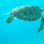 Snorkeling in the Tobago Cays