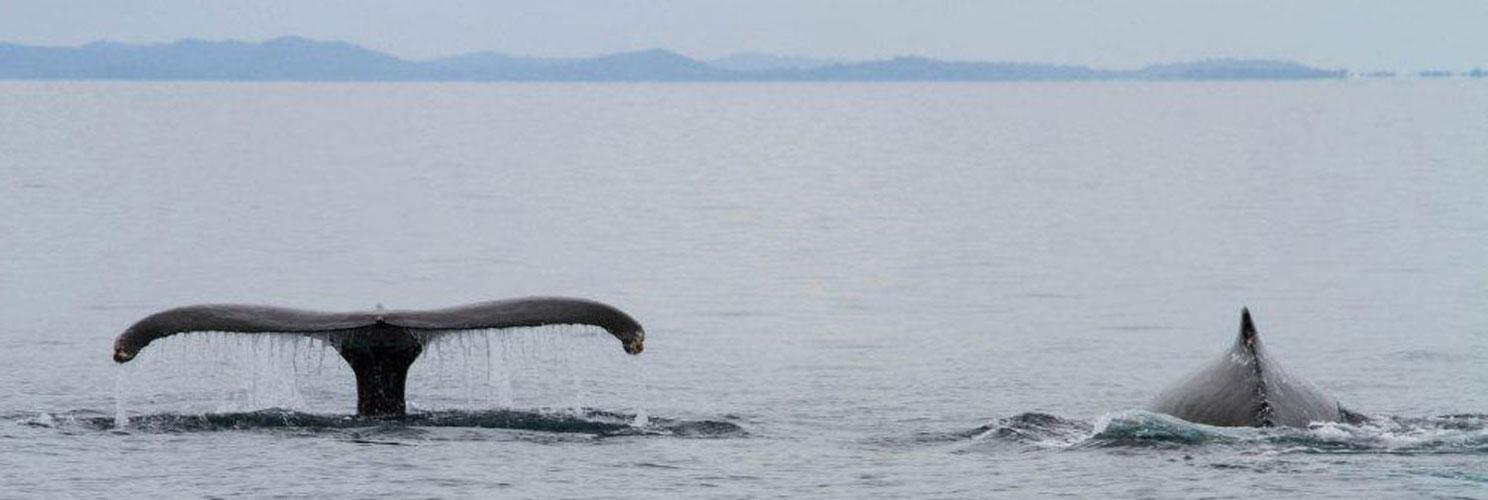 las-perlas-whale-watching